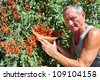 Farmer showing red cherry tomatoes - stock photo