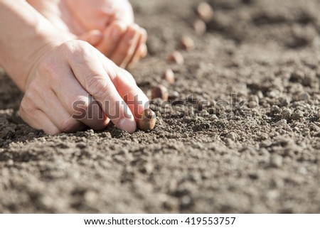 farmer sowing seeds