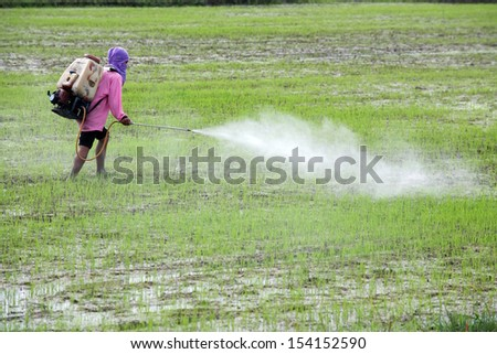 farmer spraying pesticide in paddy field - stock photo