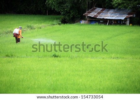 farmer spraying pesticide in paddy field. - stock photo