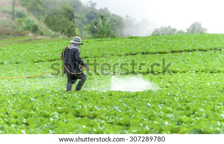 Farmer spraying pesticide in the Collard field. - stock photo