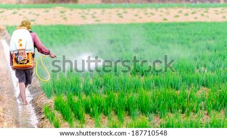Farmer spraying pesticide on onion field - stock photo