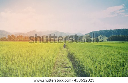 Farmer standing strong on his paddy field fighting nature