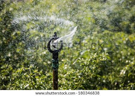 Farmer use sprinkler in chili field - stock photo