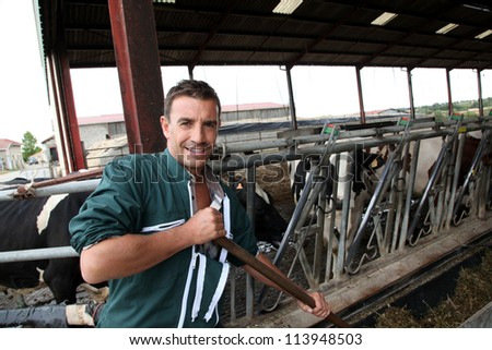 Farmer using fork in barn to feed cows