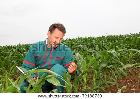 Farmer with electronic tablet analyzing corn field - stock photo
