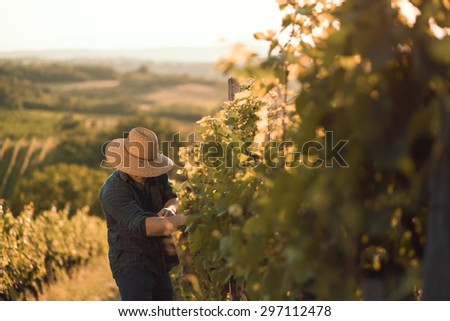 Farmer with hat working  in his vineyard - stock photo