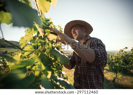 Farmer with hat working  in vineyard - stock photo