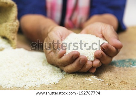 Farmer with rice in the hand - stock photo