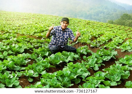 farmer working and checking on cabbage field