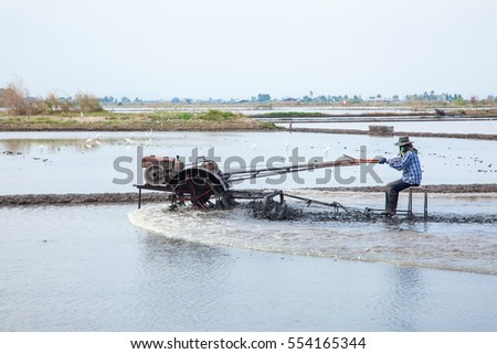 farmer working in rice plantation
