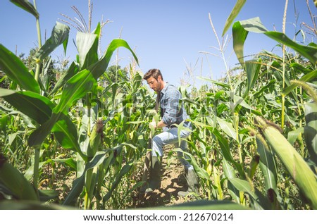 farmer working in the corn field - stock photo