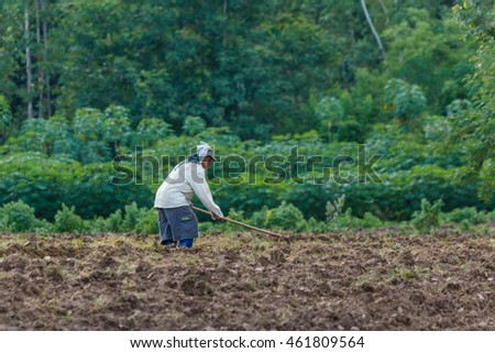 Farmers are planting rice in the farm,The peasant farming season, Lampang, starting  more from  31 July 2016.