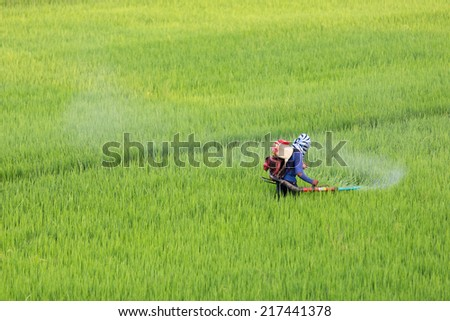 Farmers are spraying herbicide in rice. - stock photo