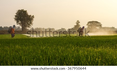 Farmers are spraying the leaves with liquid fertilizer sprayed onto the seedlings to spread green space. - stock photo