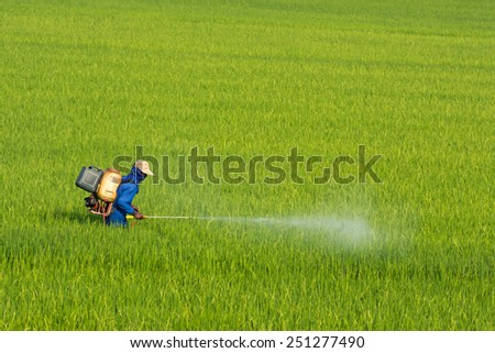 Farmers are using pesticides in rice. - stock photo