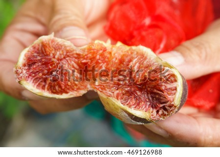 farmers hand peeling ripe fig.
