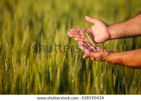 Farmers hands checking on his crop, shallow depth of field. - stock photo