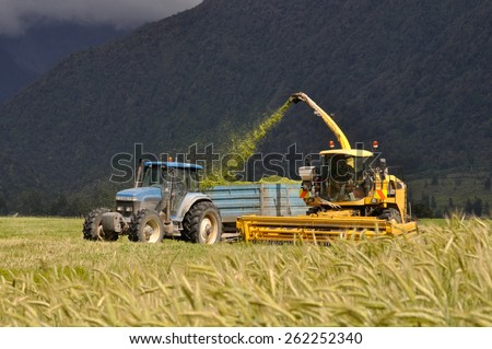 Farmers harvest a crop of triticale for silage on a West Coast dairy farm, South Island, New Zealand - stock photo