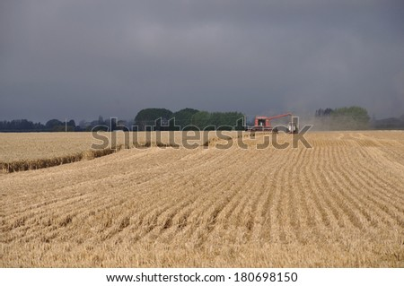 Farmers harvest a crop of wheat, South Canterbury, New Zealand