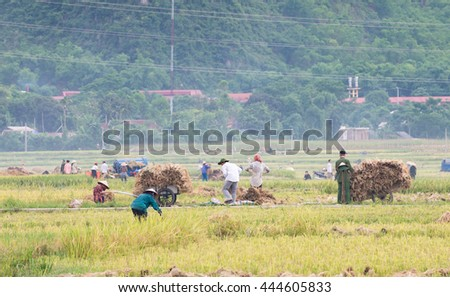 Farmers harvest rice in the summer harvest season at Mai Chau valley, Hoa Binh province, Vietnam June 18, 2016. This is one of the important season paddy rice of the year.