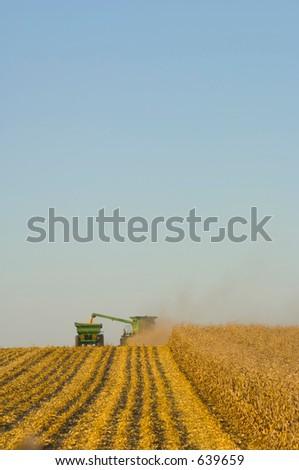 Farmers harvesting corn - stock photo