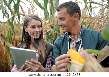 Farmers in cornfield using electronic tablet - stock photo