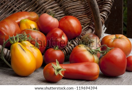 Farmers ripe red and yellow tomatoes in a basket on the table