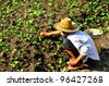Farmers to maintain agricultural crops to ensure the quality of the crop - stock photo