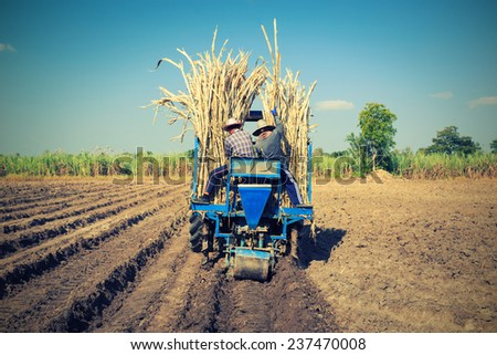 Farmers was sugarcane field plant with tractor - stock photo