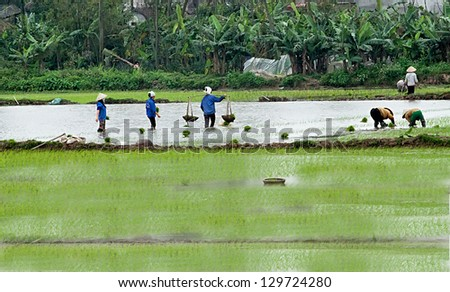 farmers working in the fields - stock photo