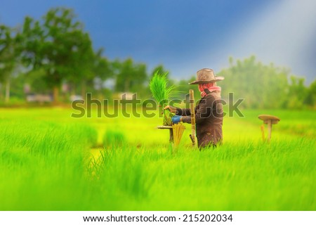 Farmers working planting rice in the paddy field - stock photo