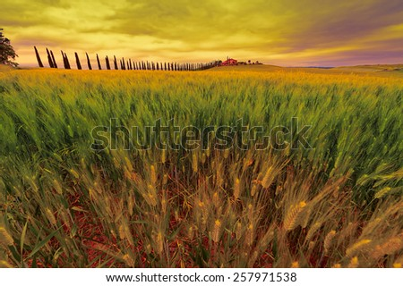 Farmhouse and Green Sloping Meadows of Tuscany at Sunset - stock photo