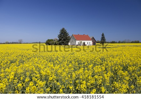 farmhouse in the rapeseed field in germany near mecklenburg coast