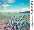 Farmhouses Surrounded by Fields of Young Corn, Instagram Effect - stock photo