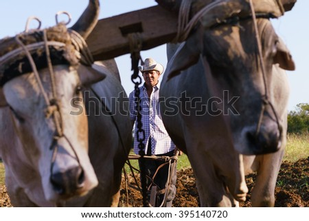 Farming and cultivations in Latin America. Middle aged hispanic farmer manually ploughing the soil with ox at the beginning of the growing season. - stock photo