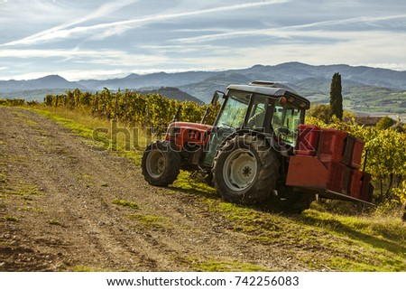 Farming in Tuscany, Italy. Harvesting grapes and olives. Beautiful landscape with mountains and blue skies.