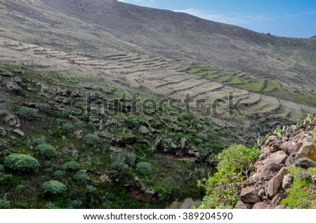farming terraces and deep gully on the slopes of cliffs in Teno Alto Teno Rural Park, Tenerife, Canary Islands, Spain - stock photo
