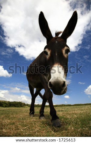 Farmland and Grazing Donkey - Overcast Blue Sky - stock photo