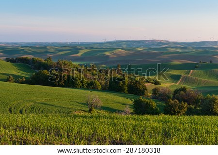 Farmland in early morning, Steptoe Butte State Park, Oakesdale, Washington