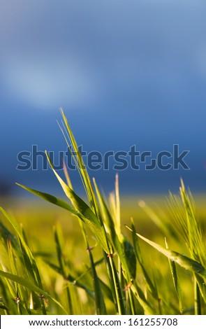 Farmland in rural Australia - stock photo
