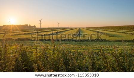 Farmland in sunlight at dawn - stock photo