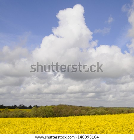 Farmland planted with oil seed rape crop with big sky - stock photo