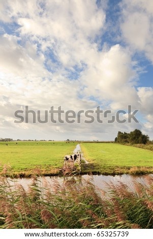 Farmland with canal and cows under blue cloudy sky, the Netherlands - stock photo