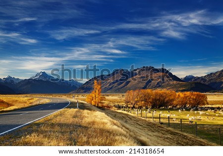 Farmland with grazing sheep and Mount Cook on background, Canterbury, New Zealand - stock photo