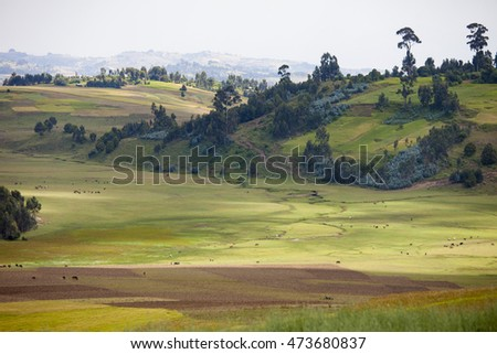Farms and animals in the mountains of Ethiopia