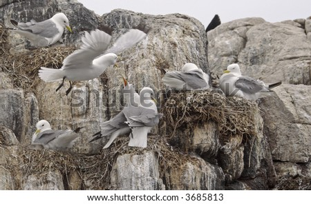 Farne Islands bird sanctuary in Northumberland England in the North Sea