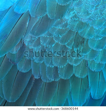 Fascinated blue texture taken of Blue-and-gold macaw bird's feathers, the beautiful blue background - stock photo