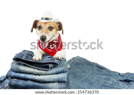 Fashion dog denim clothing. Cowboy hat and red bandana - stock photo