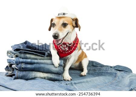 Fashionable dog advertises coolest designer jeans. Cowboy hat and red bandana. Wild Wild West - stock photo